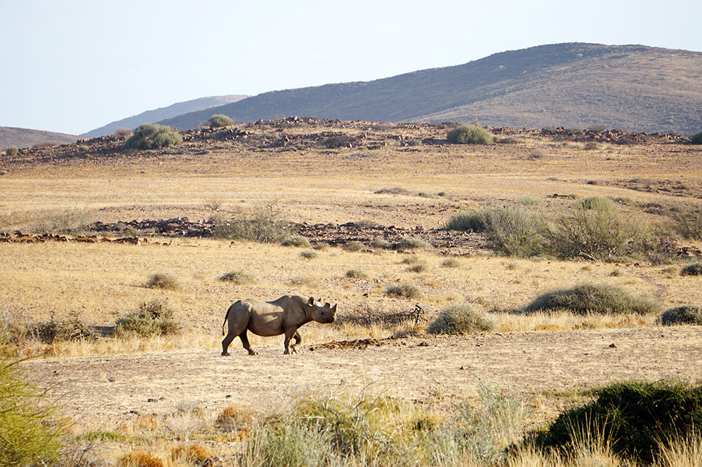 Rhino tracking in the Hoanib Valley