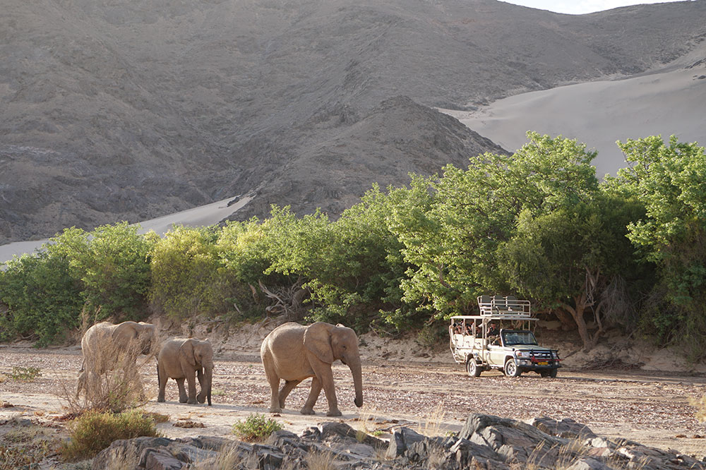 A safari group driving past a herd of elephants in the Hoanib Valley