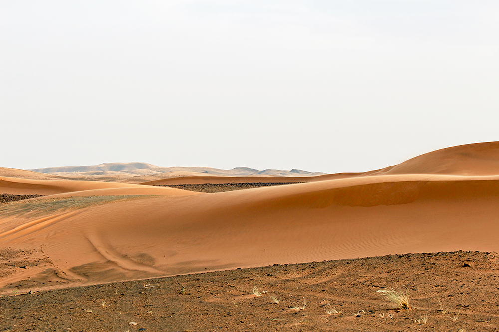 A view of the Sahara