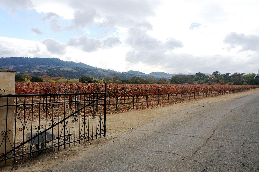 The vineyards at Sunstone Vineyards & Winery