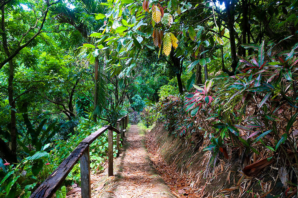 The tropical gardens at Annandale Falls - Photo by Hideaway Report editor
