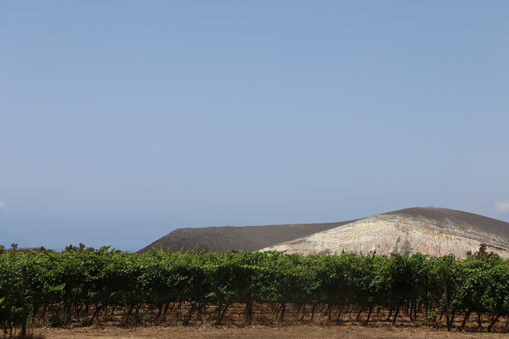 Hauner vineyard on Salina, Aeolian Islands, Italy