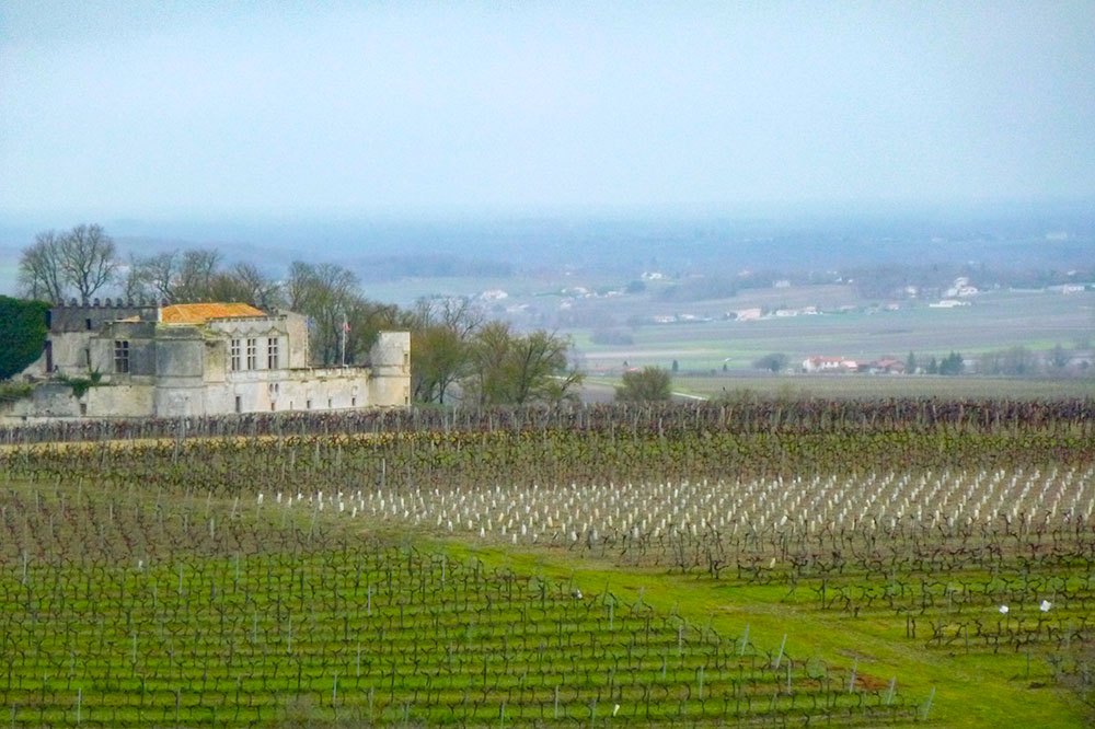 View of a vineyard in Cognac