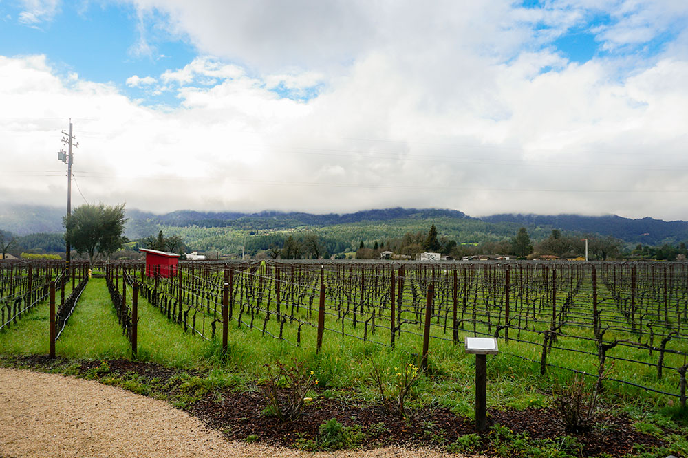 Raymond Vineyards in St. Helena, California