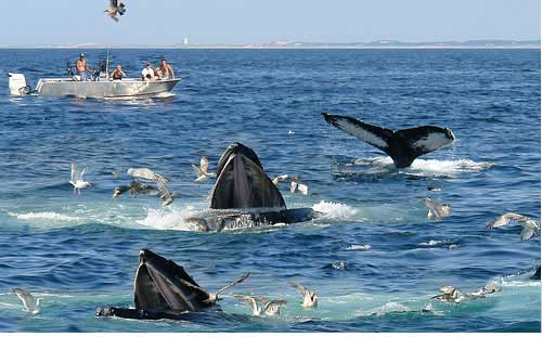 Image result for blue whales sri lanka