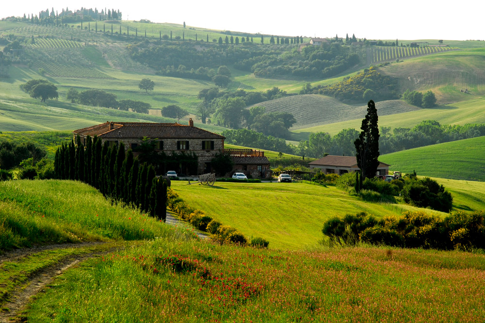 The rolling hills and vineyards behind the Casabianca farmhouse