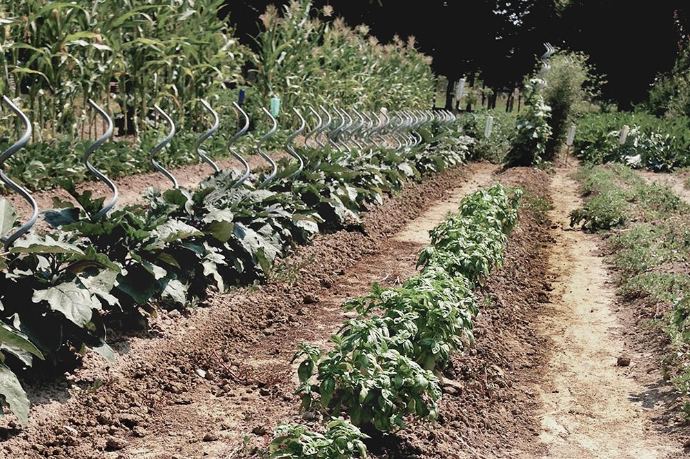 The garden at Ca' de Memi Agriturismo in Piombino Dese, Italy