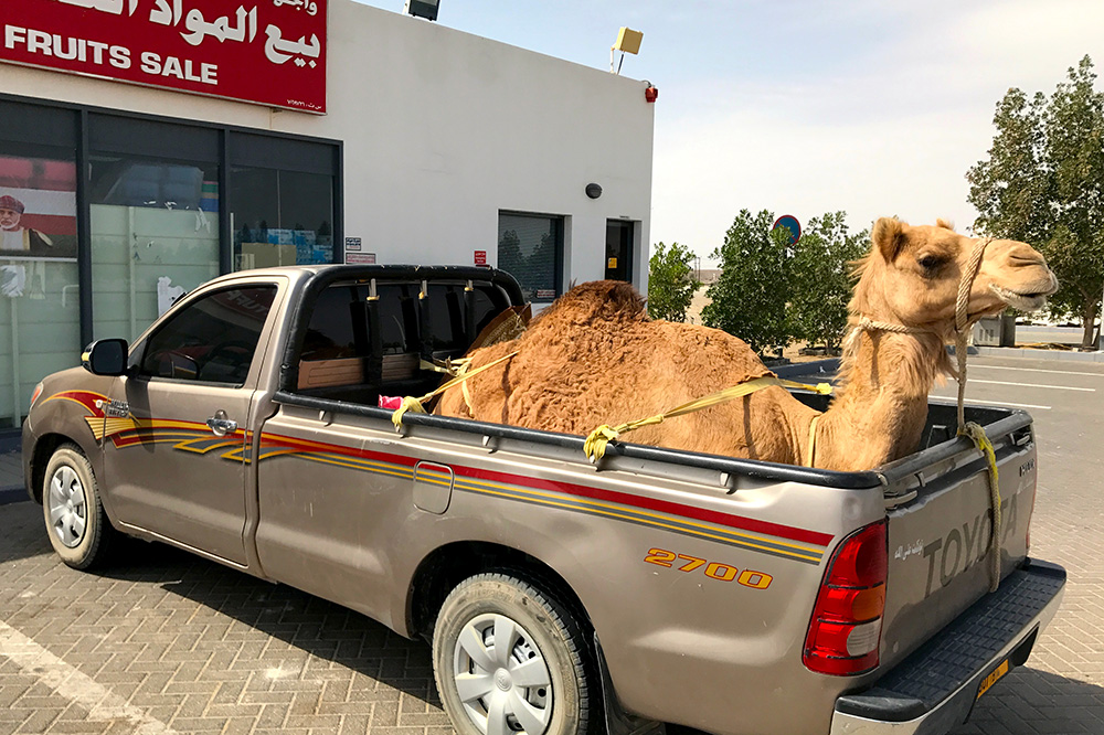 A photo from Oman shows the type of unexpected thing our editors see as they travel around the world.