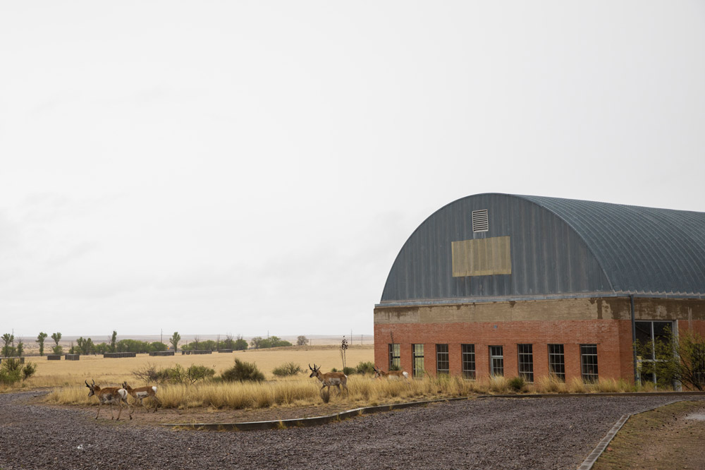 Pronghorn antelope graze in front of an exhibition hangar at the Chinati Foundation