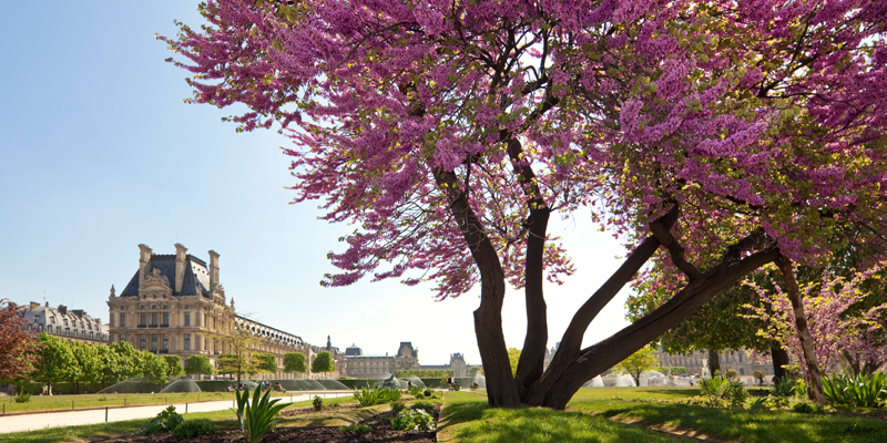 Gardens of Louvre museum in spring