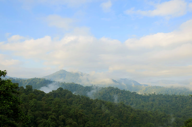 Cloud forest from the viewing platform at Mashpi Lodge - Photo by Andrew Harper