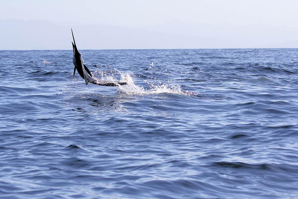 Deep sea fishing tournament schedule for Alaska deep sea fishing