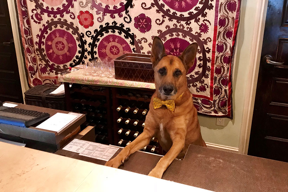 """Wiley, the """"director of pet relations,"""" at Canary Hotel in Santa Barbara, California"""