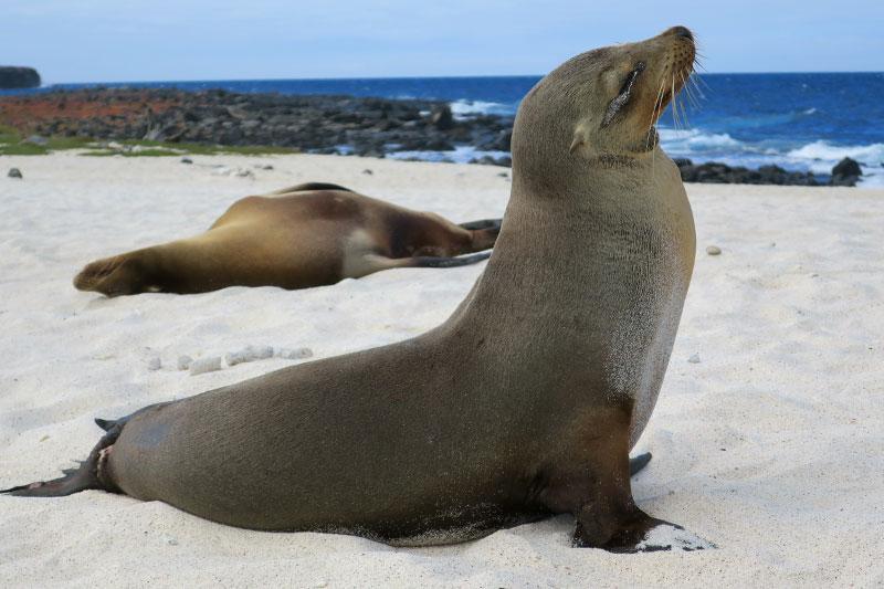 Sea lions on Mosquera Island