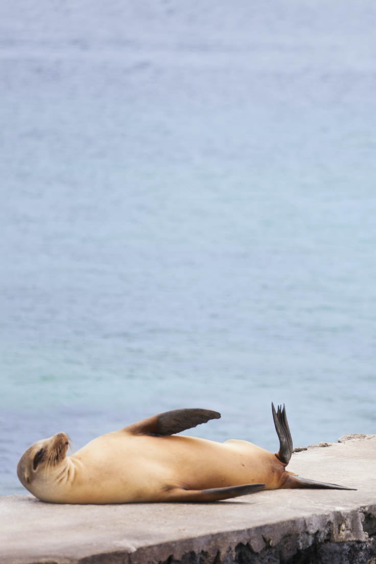 A sea lion on a Galapagos island.