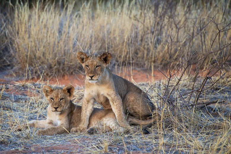 Gallery: Botswana and South Africa