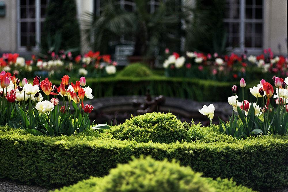 The box garden in the courtyard of B & B Hôtel Verhaegen