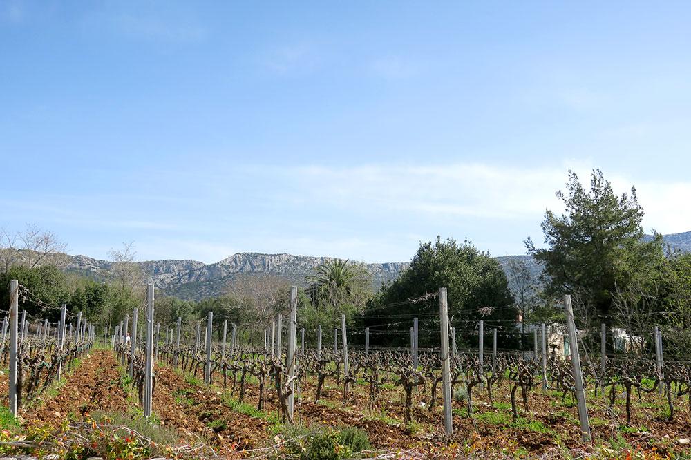 The vineyards at Korta Katarina in Orebić