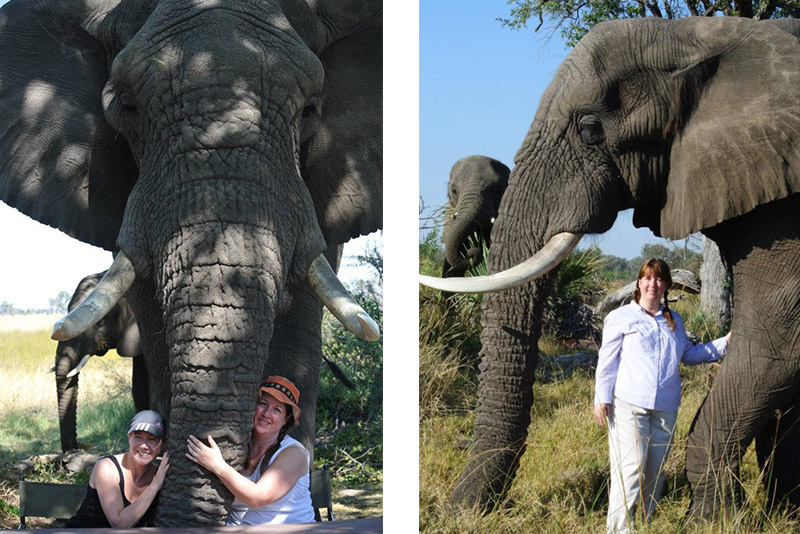 At the Living With Elephants Foundation in Botswana