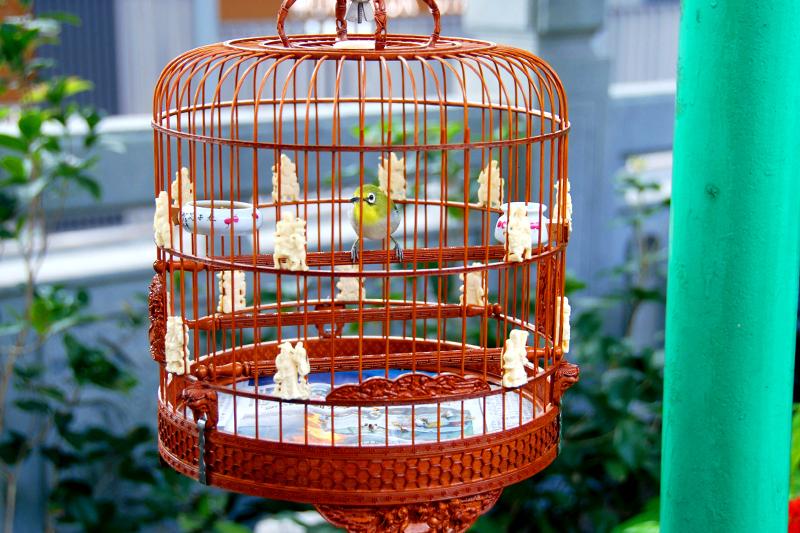 A bird displayed at Yuen Po Street Bird Garden