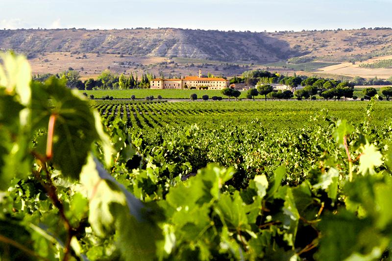 Vineyards surrounding Abadía Retuerta LeDomaine