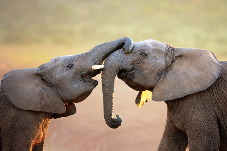 5 Indelible Encounters With Elephants