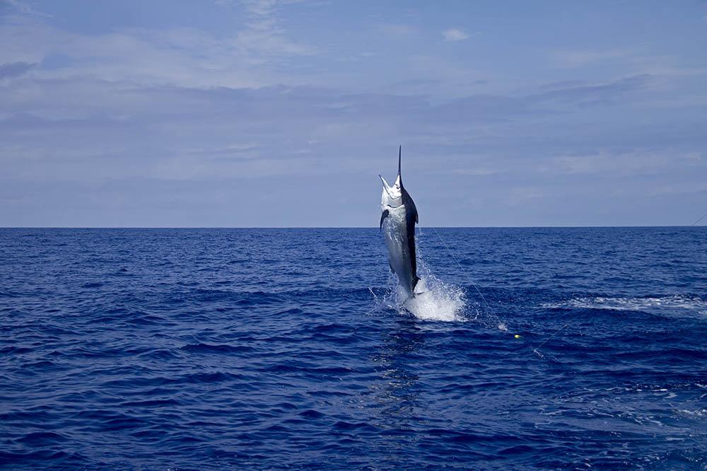 Deep sea fishing in hawaii for Deep sea fishing hawaii