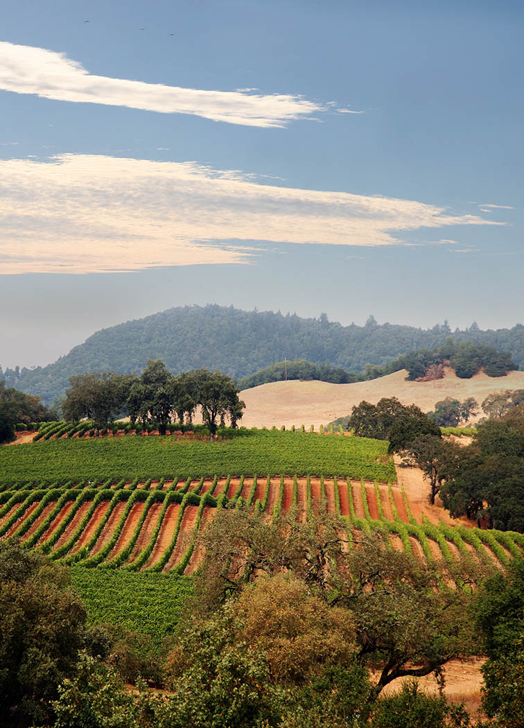 Travel Tips For The Napa Valley California
