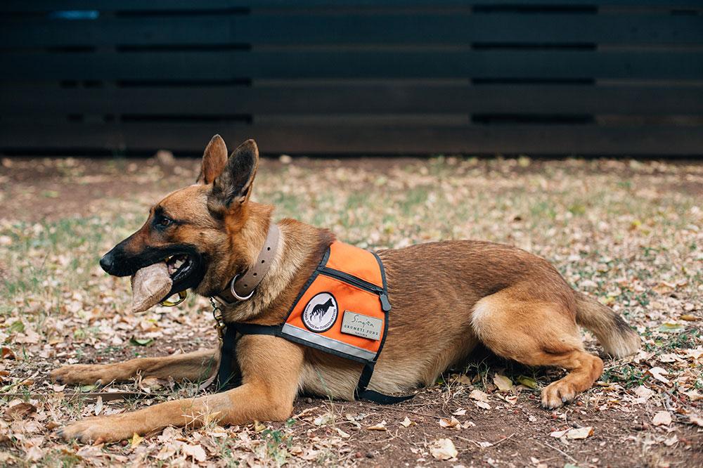 A member of the canine unit at Singita Grumeti in Tanzania