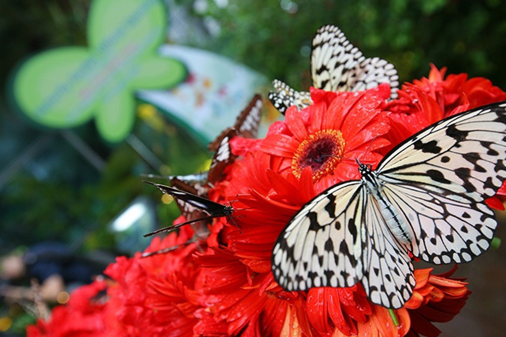 Butterfly Garden at Changi Airport, Singapore
