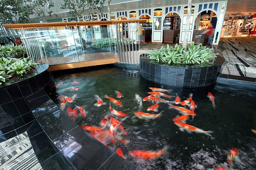 Koi Pond at Changi Airport, Singapore