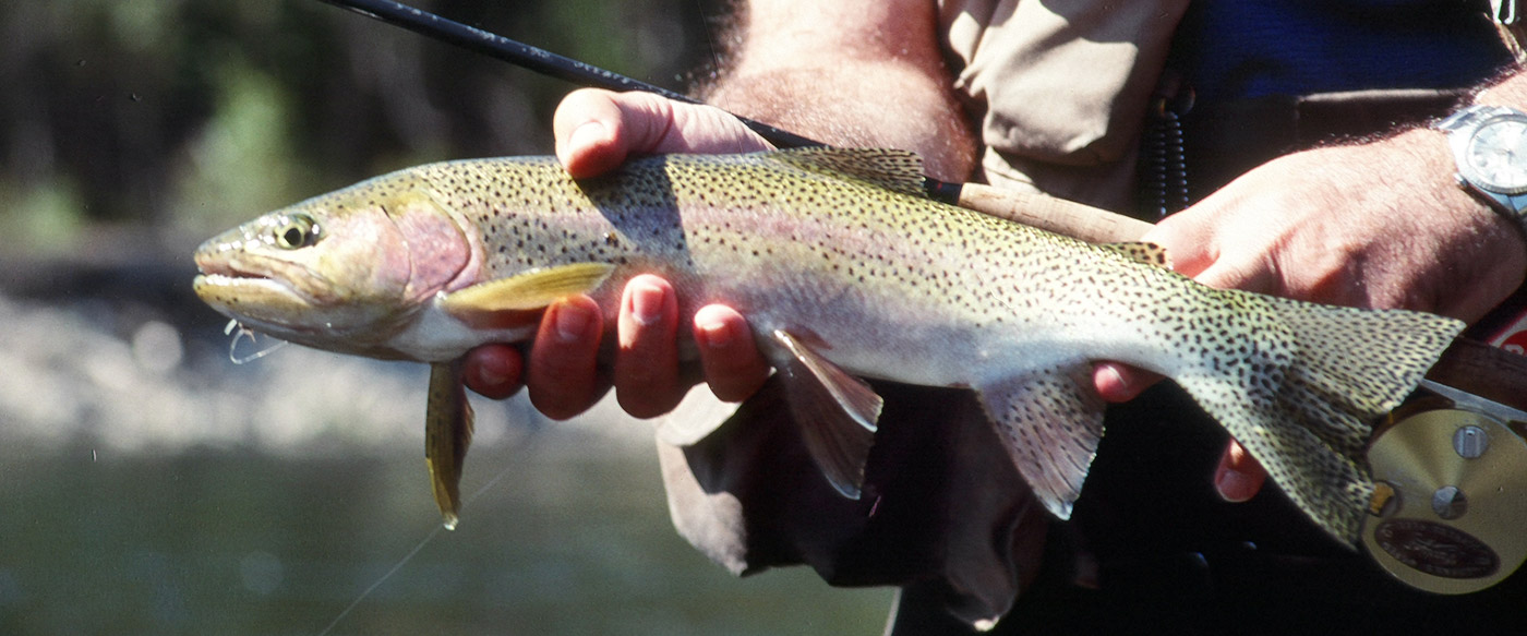 The orvis fly fishing school in manchester vermont for Orvis fly fishing blog