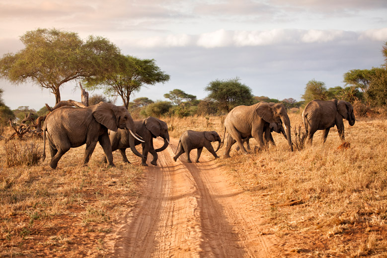 What to See on a Wildlife Safari