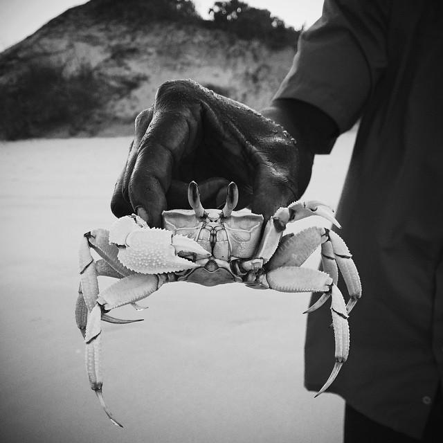 Benguerra Island Crab