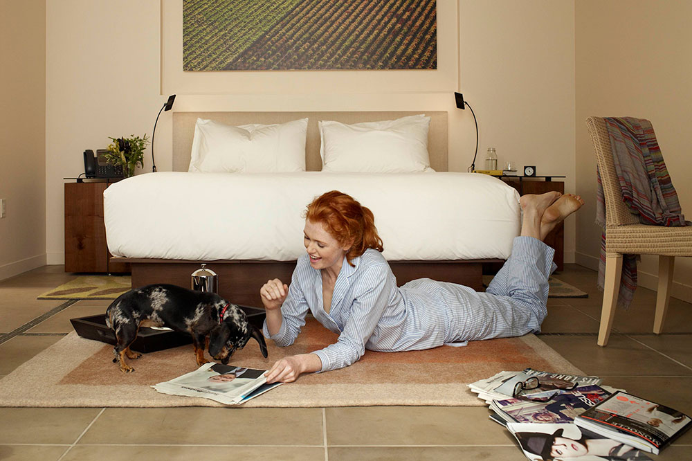 A dog guest playing in a room at Bardessono Hotel & Spa in Yountville, California