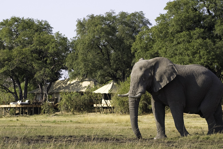 'Save the Elephant' Safari Itinerary