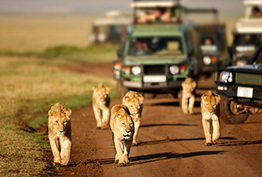 Safari | Travel Advisors