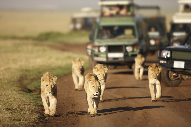 Luxury Safari: South Africa & Botswana