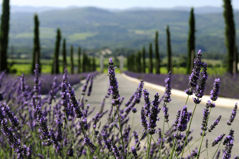 La Coquillade   Luxury Hotel in Provence France