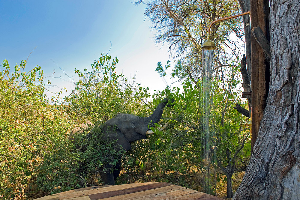 Elephant near an outdoor shower at Zarafa Camp
