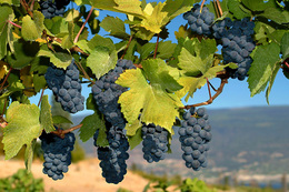 Napa Sonoma Itinerary Vineyard | Travel Advisors