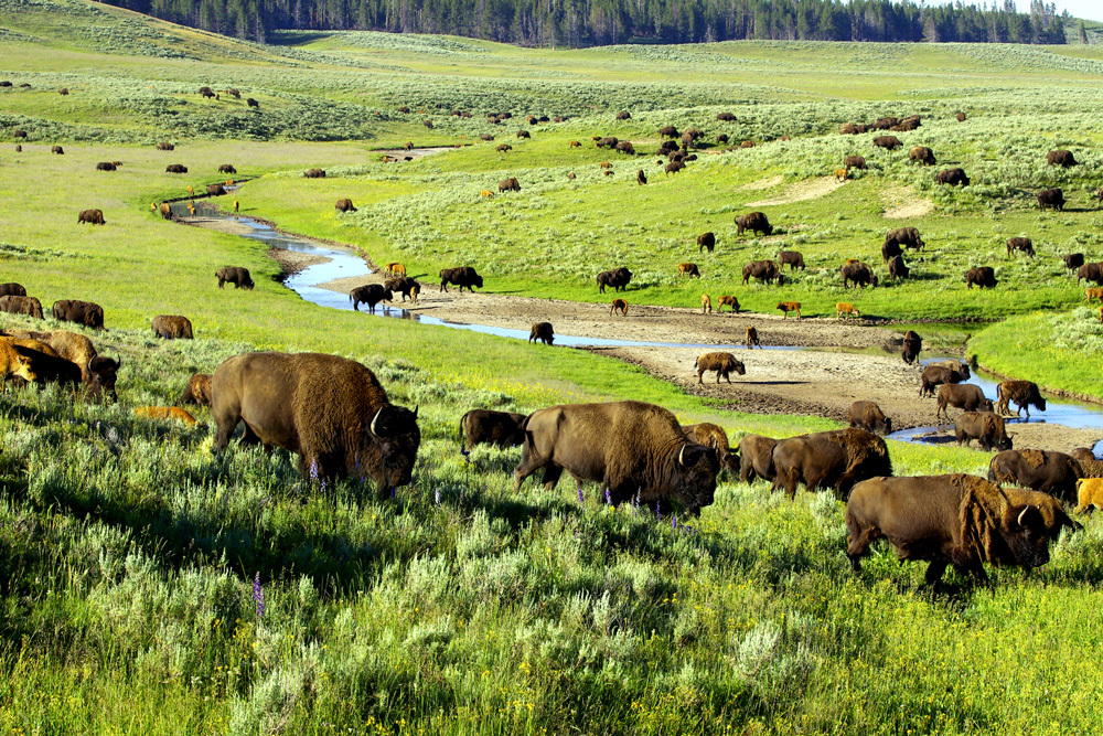 itinerary yellowstone grand tetons andrew harper travel