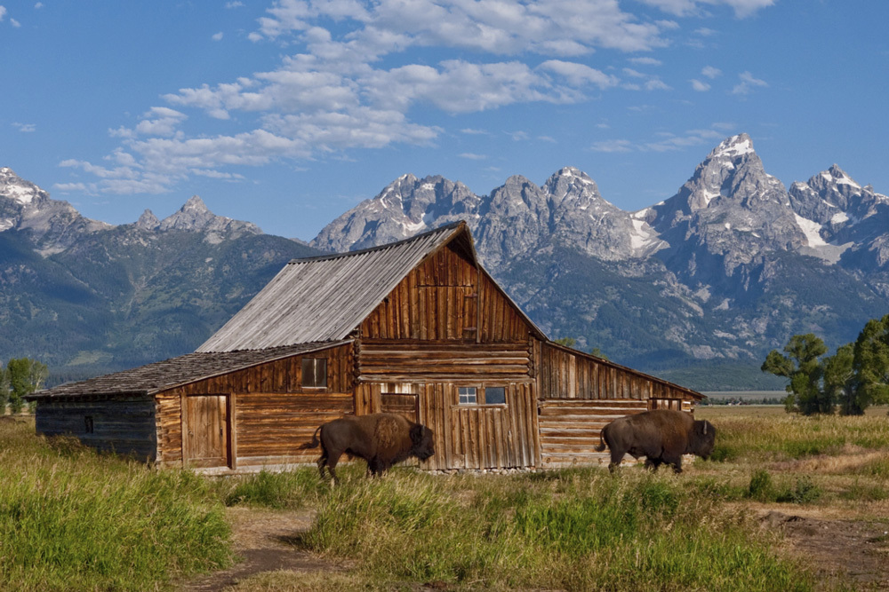 The Tetons loom over a barn and bison