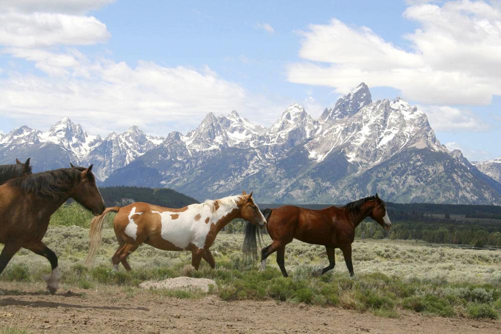Itinerary Yellowstone Grand Tetons Andrew Harper Travel