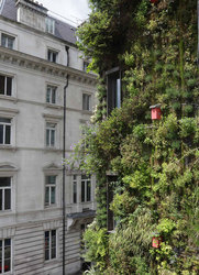 The living wall of The Athenaeum Hotel & Residences in London, England
