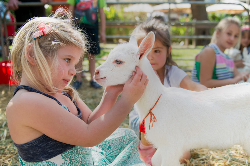 Children playing with goats at the Goat Tower at Fairview Vineyards