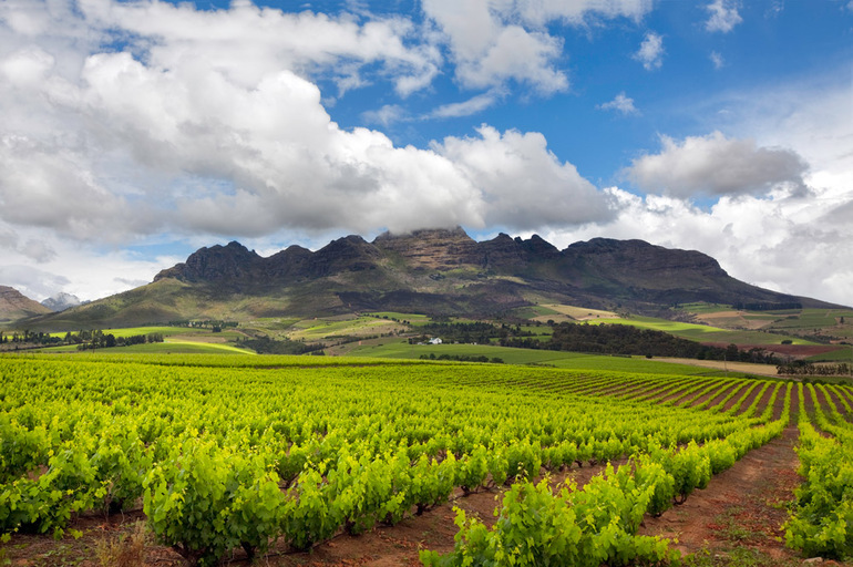 The Stellenbosch wine lands region near Cape Town.