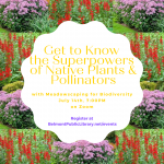 Get to Know the Superpowers of Native Plants & Pollinators
