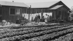 Japanese Incarceration WWII