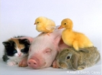 Young Adult Program - Baby Animal Day!  Session 2 / 3:30-4:00
